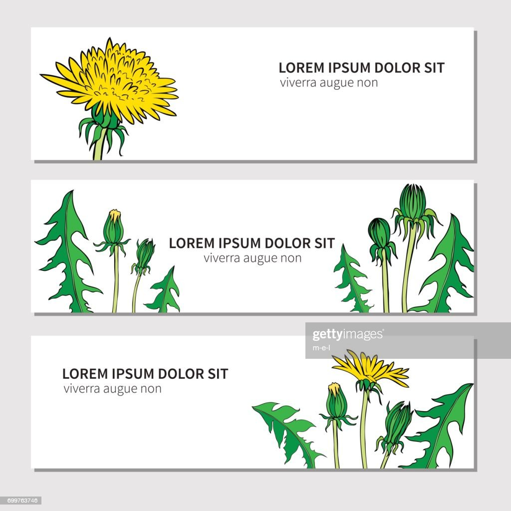 Dandelion flower, bud, leaves hand drawn vector ink color sketch isolated on white, Round frame, graphic floral decorative wreath for cosmetic, design package tea, holiday, medical organic product
