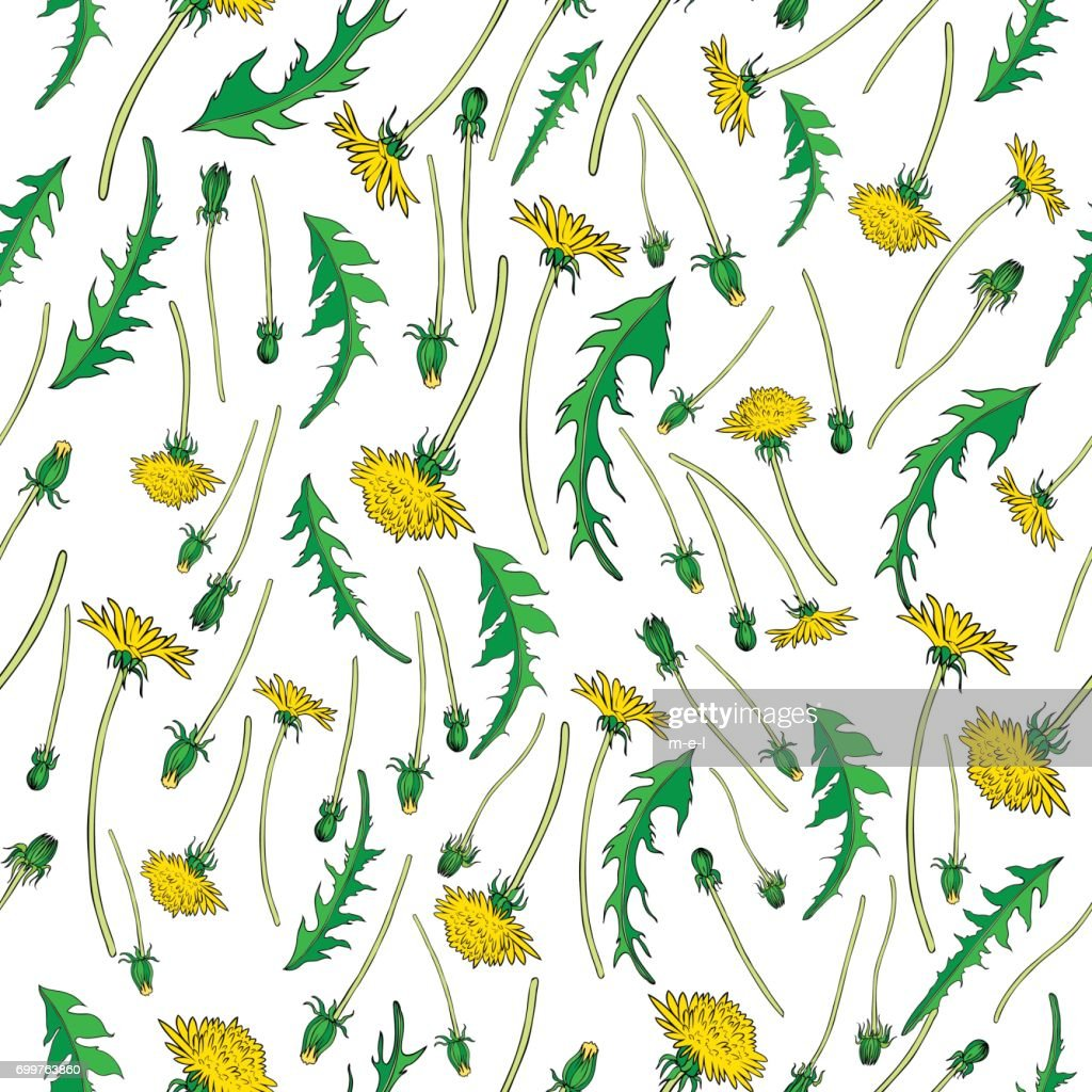 Dandelion flower, bud, leaves hand drawn vector ink color sketch isolated on white, Vector seamless pattern, graphic floral texture background for cosmetic, design package tea, textile, wallpaper