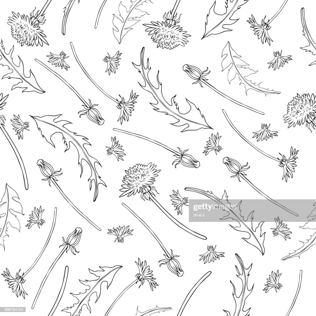 Dandelion flower, bud, leaves hand drawn vector ink sketch isolated on white background, Vector seamless pattern, graphic floral texture line art for cosmetic, design package tea, textiles, wallpaper