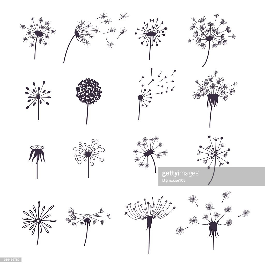 Dandelion Fluffy Flower and Seeds Set. Vector
