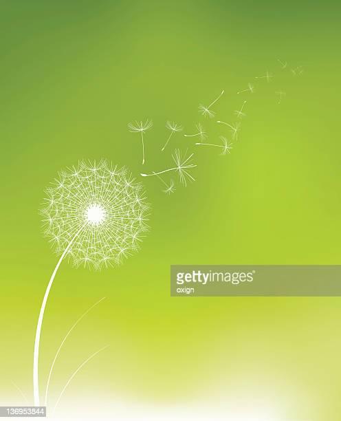 illustrations, cliparts, dessins animés et icônes de aigrette de pissenlit - fleur de pissenlit