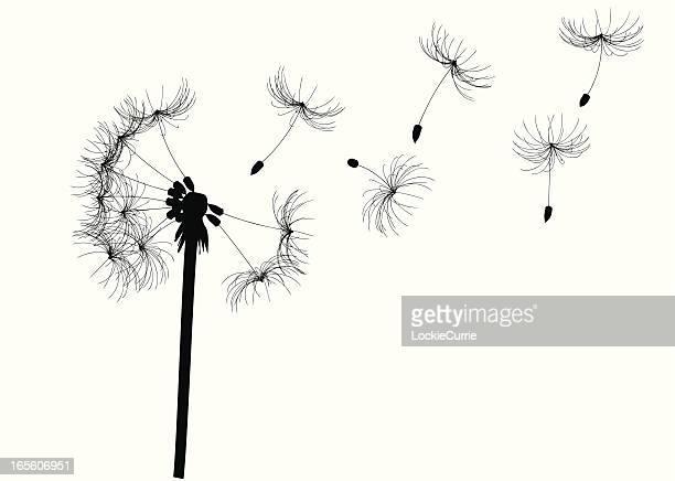 illustrations, cliparts, dessins animés et icônes de fleur de pissenlit - innocence