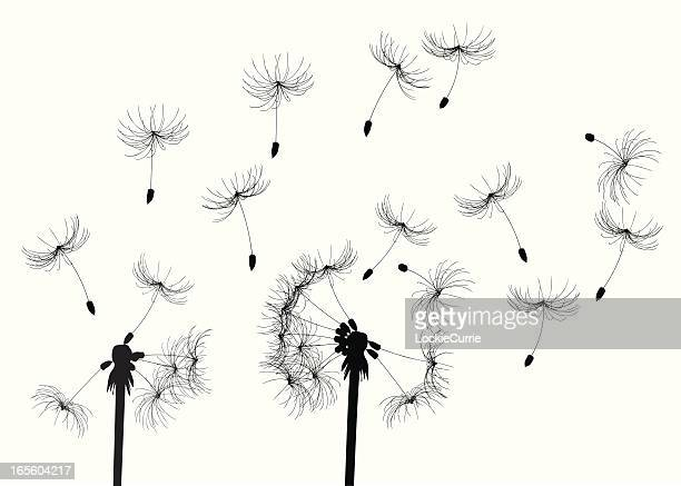 dandelions dans la brise