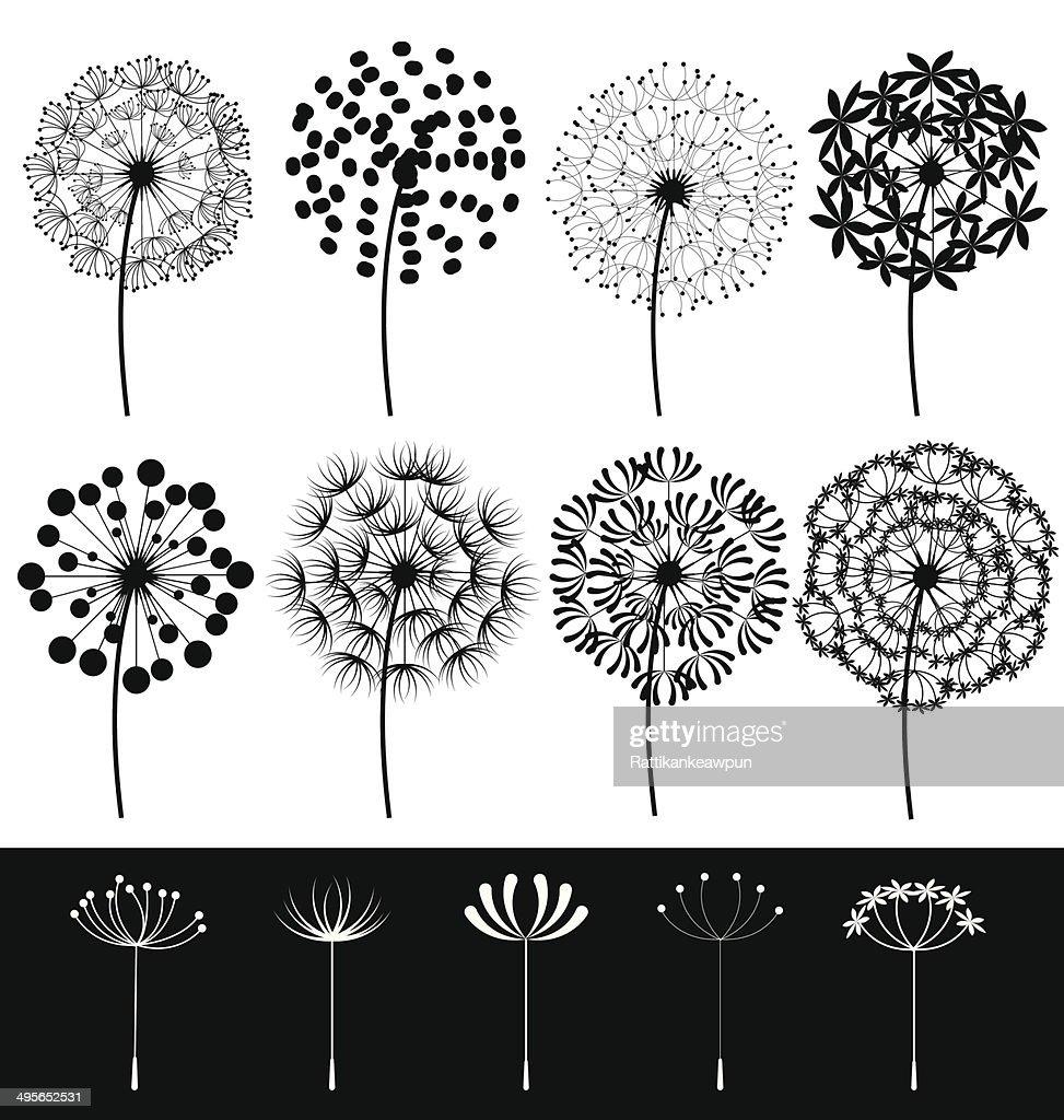 Dandelions set vector