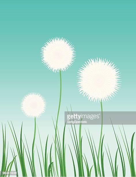 dandelions - pollen stock illustrations, clip art, cartoons, & icons