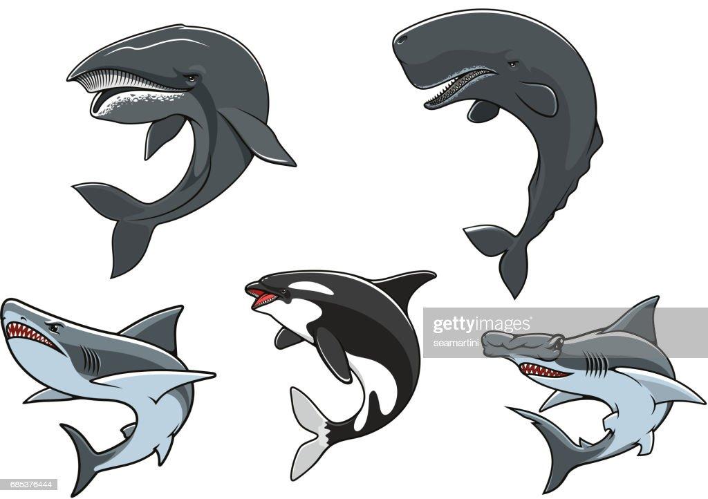 Dangerous marine predators icon set