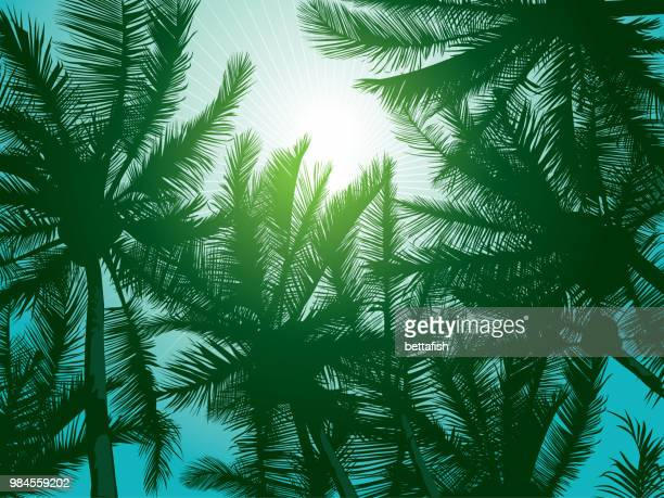 dark dreen palm trees - coconut leaf stock illustrations, clip art, cartoons, & icons