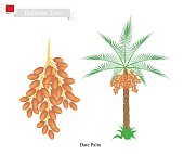 Date Palm, A National Tree of Bahrain