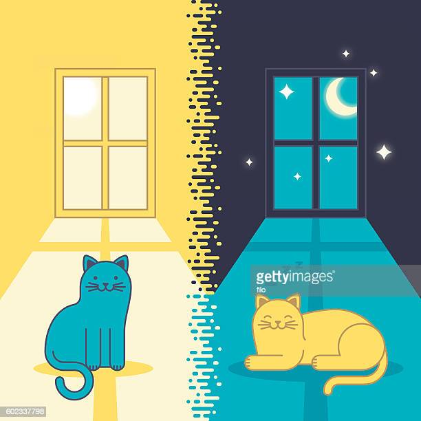 Day Cat and Night Cat