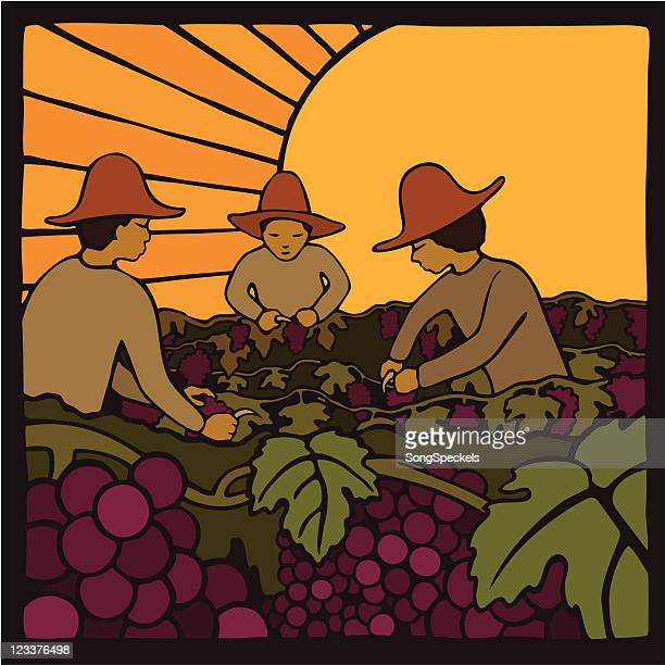 Day Laborers harvesting grapes