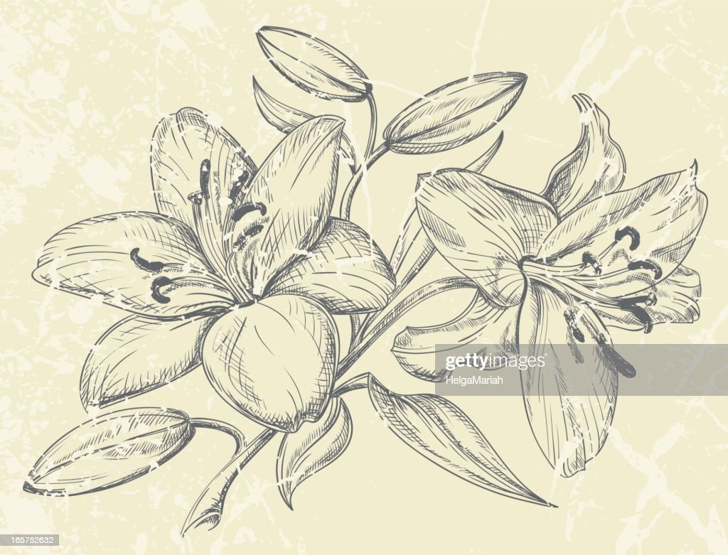 Day Lilies Drawing