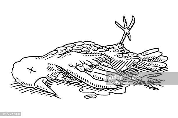 dead bird drawing - frankramspott stock illustrations