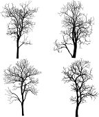 Dead Tree without Leaves Vector Illustration Sketched.
