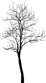 Dead Tree without Leaves : Vector
