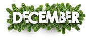 December banner with fir branches.