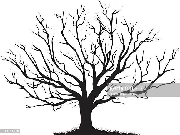 deciduous bare tree empty branches black silhouette - bare tree stock illustrations