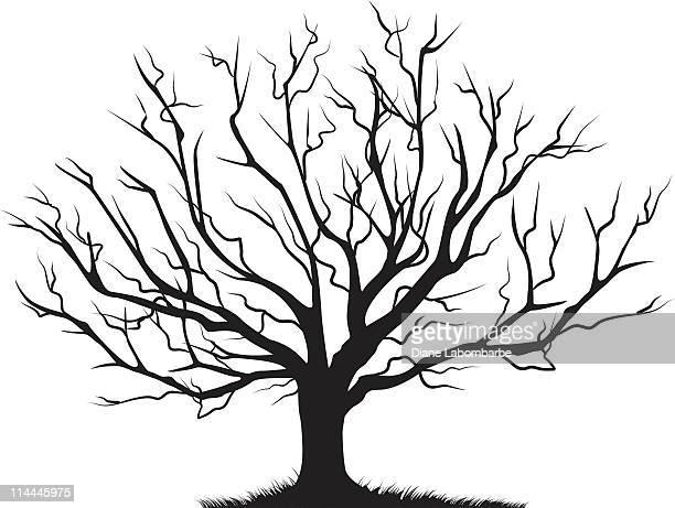 Feuillus Arbre sans feuillage vide Branches Silhouette noire
