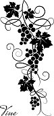 Decorative element from the vine on a white background. Branch of grapes.