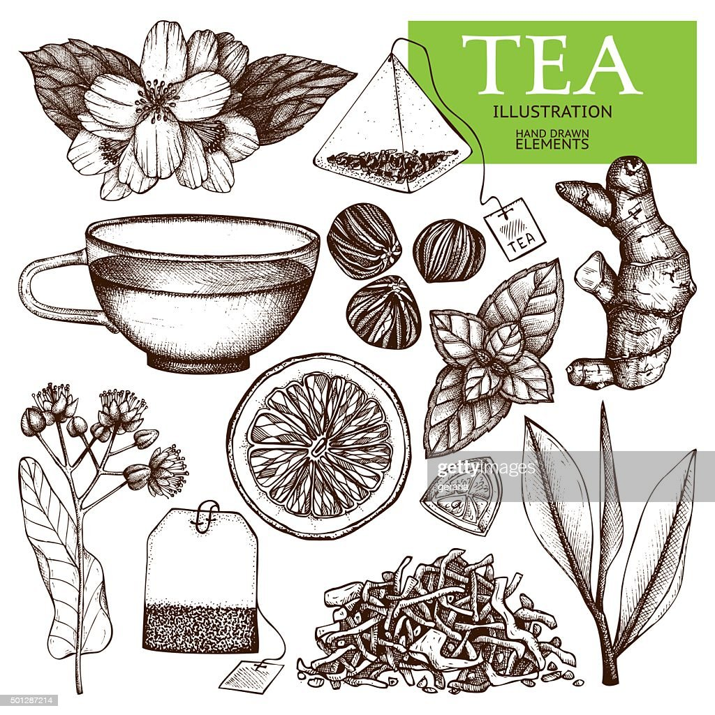 Decorative inking vintage tea sketch.