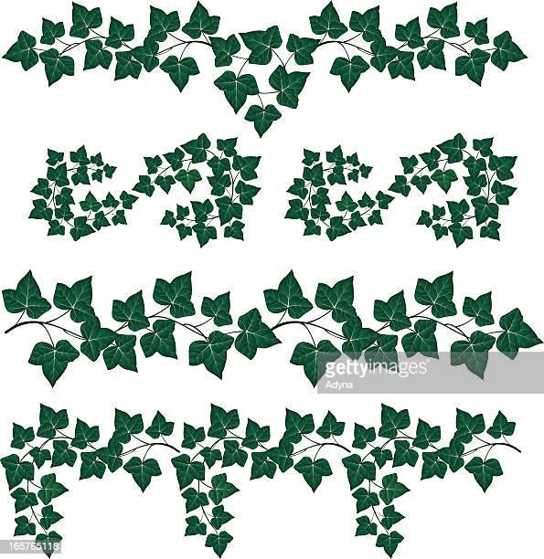 ilustraciones, imágenes clip art, dibujos animados e iconos de stock de ivy decorativos - enredadera