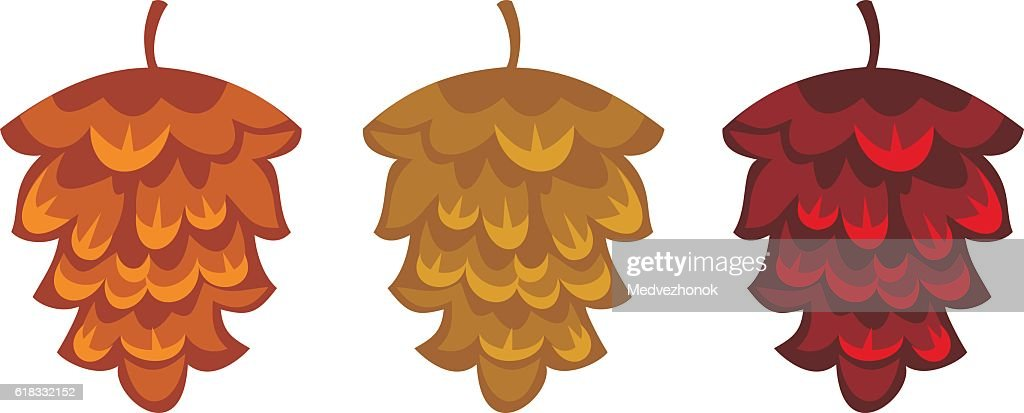 Decorative pine-cones isolated on a white background. Vector clip art.