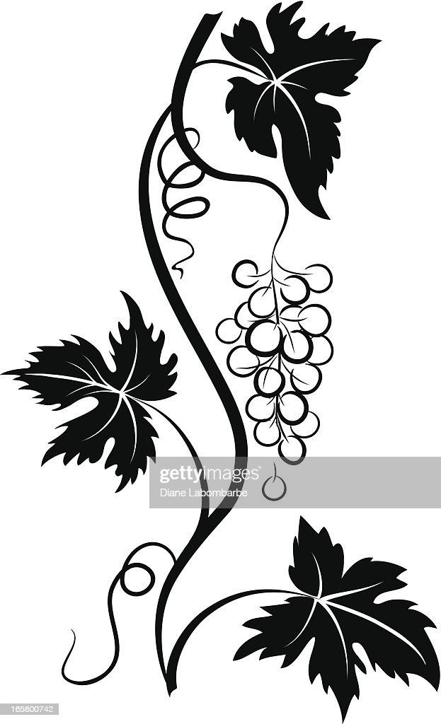 Decorative Stylized Grapevine with Grape bunch and Three Leaves : Stock Illustration