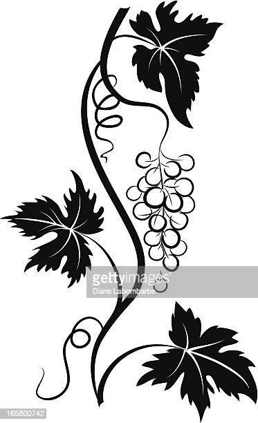 decorative stylized grapevine with grape bunch and three leaves - vine stock illustrations