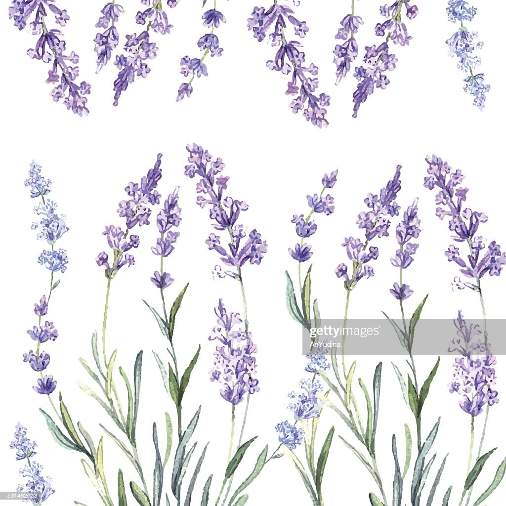 Decorative watercolor background of Lavender