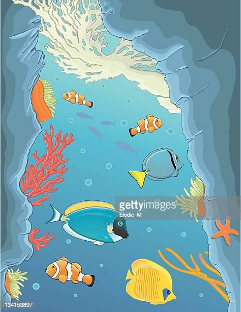 deep in the sea / fond de la mer - acanthuridae stock illustrations, clip art, cartoons, & icons