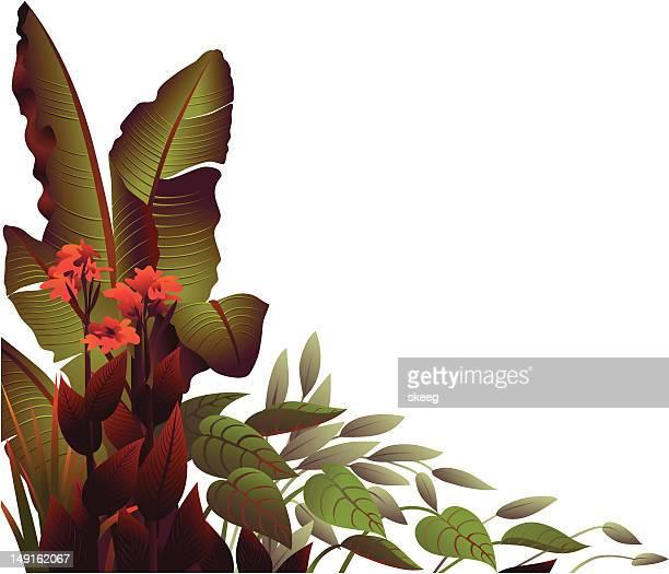 illustrations, cliparts, dessins animés et icônes de des tropical - plante tropicale