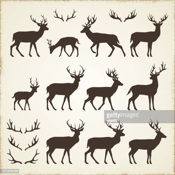 deer and antler silhouettes - deer stock illustrations