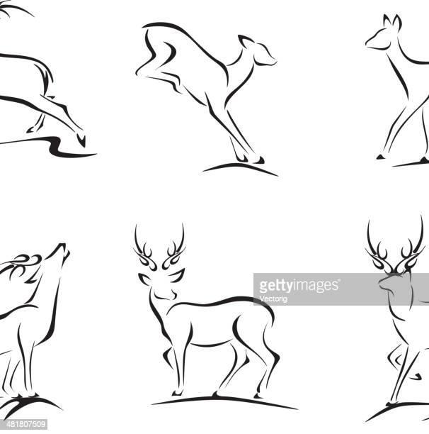 illustrations, cliparts, dessins animés et icônes de esquisses et cerf buck - biche
