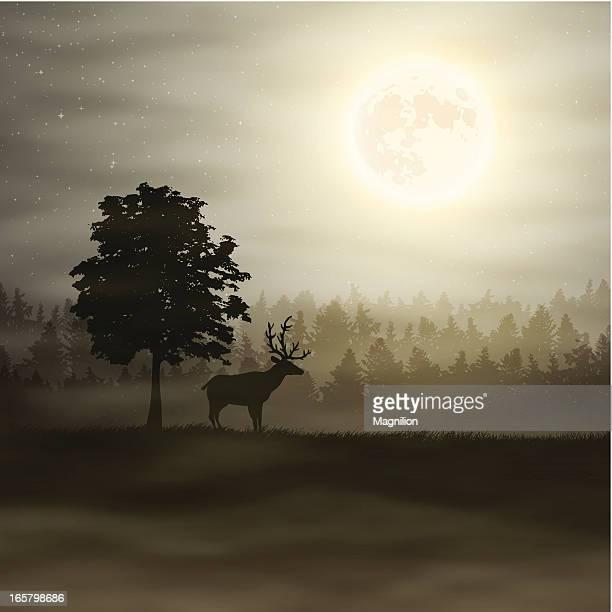 Deer und Mond