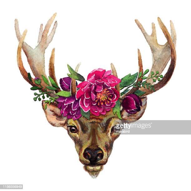 ilustrações, clipart, desenhos animados e ícones de deer boho estilo flores efeito stipple - veado macho
