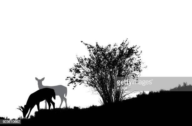 Deer Grazing In The Fields
