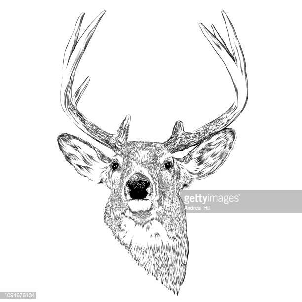 deer head ink vector illustration in engraving style - antler stock illustrations