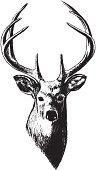 Deer Head (Vector)