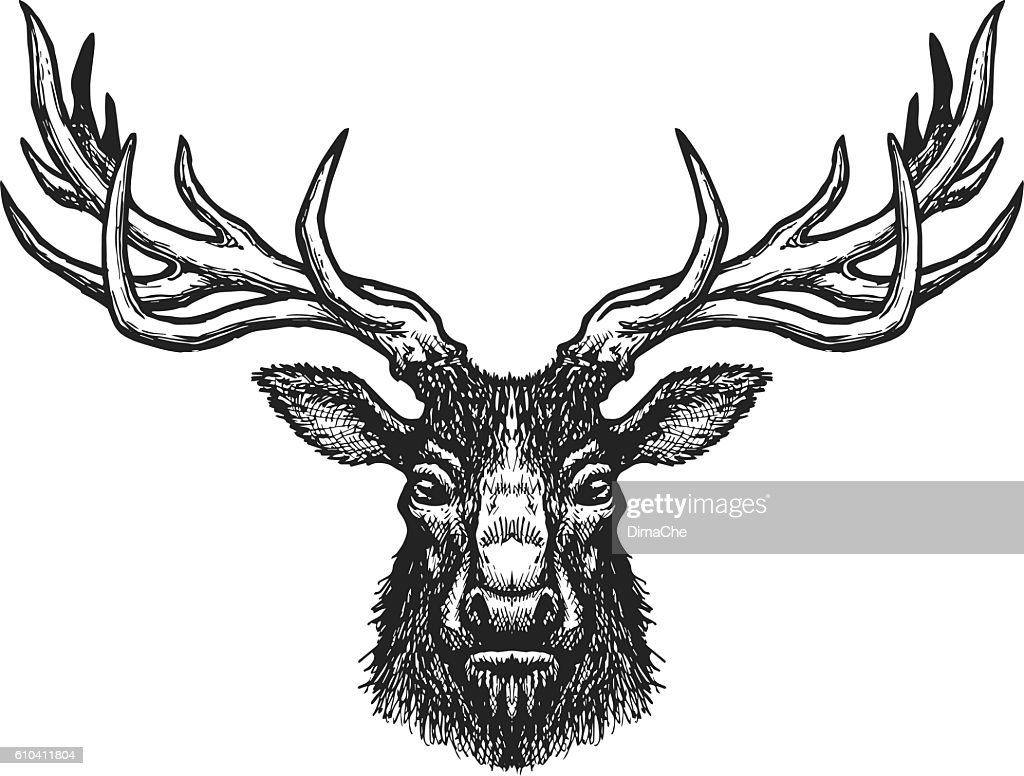 Deer head : stock illustration
