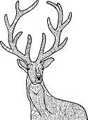 Deer illustration.