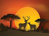 deer in forest with sunset