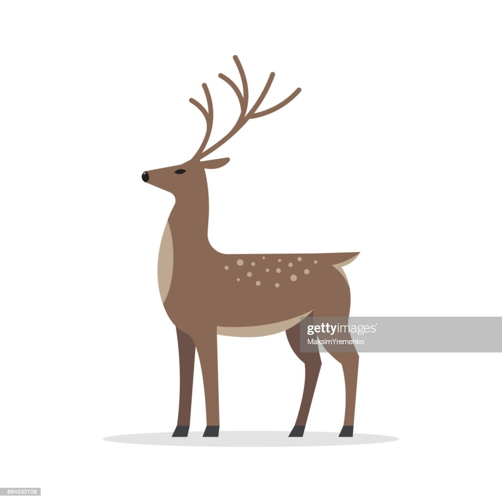 Deer male flat vector isolated on white background.