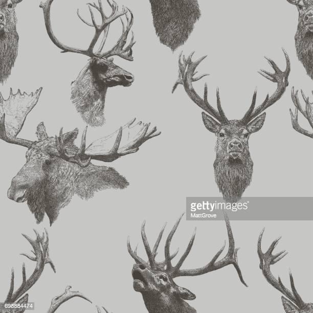 deer Repeat