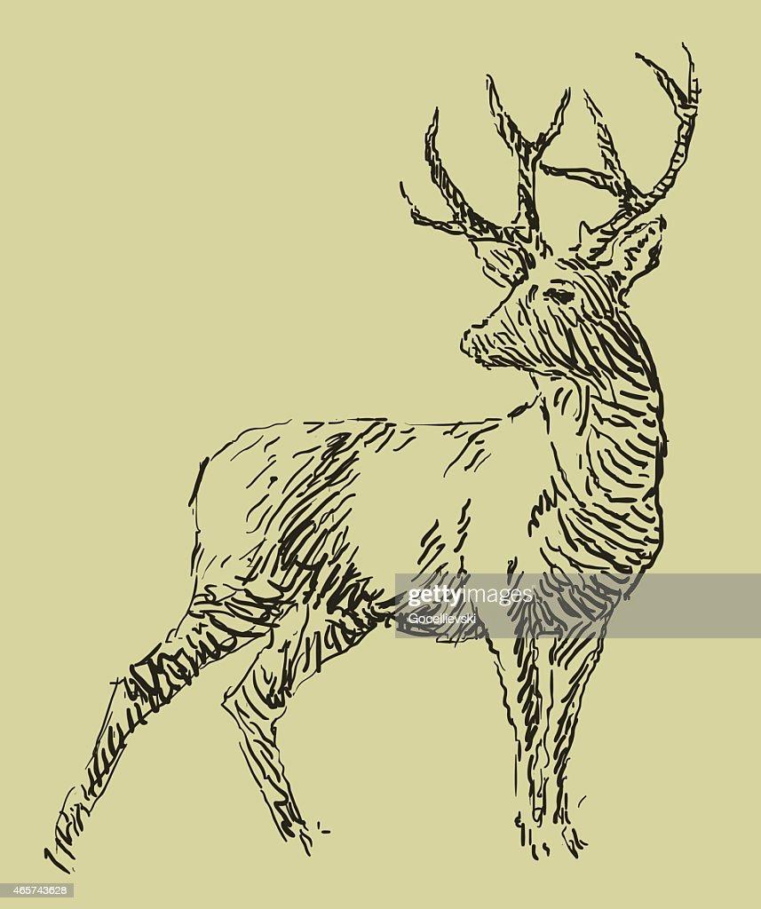 Deer sketch drawing illustration