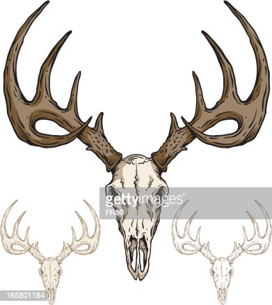 deer skull vector art   getty images