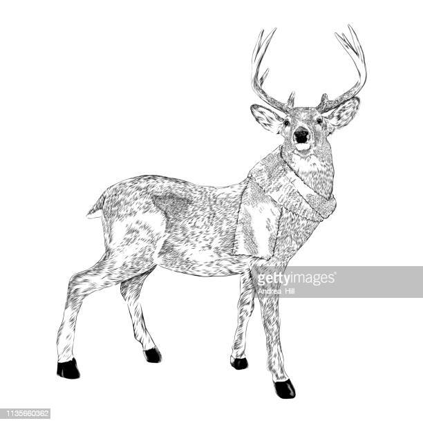 deer wearing a scarf vector ink illustration in vintage engraving style - stag stock illustrations