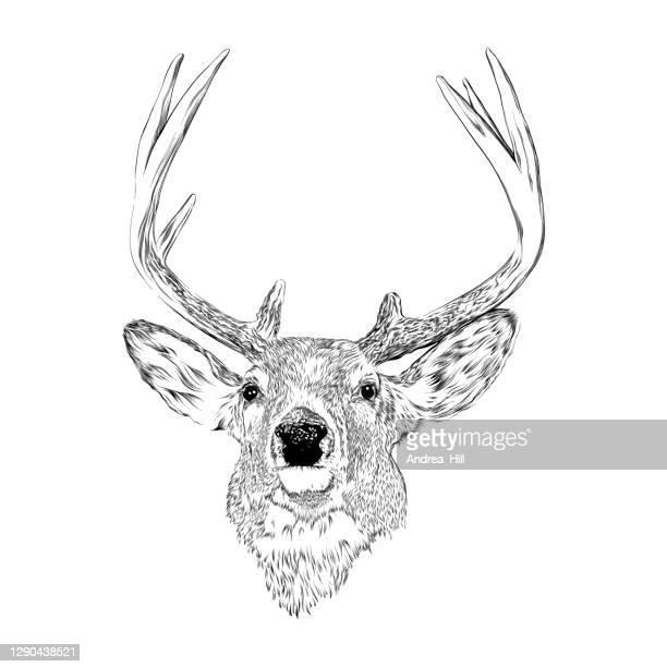 アントラーズペンとインクの描画と鹿。ベクトルepsのイラスト - 狩りをする点のイラスト素材/クリップアート素材/マンガ素材/アイコン素材