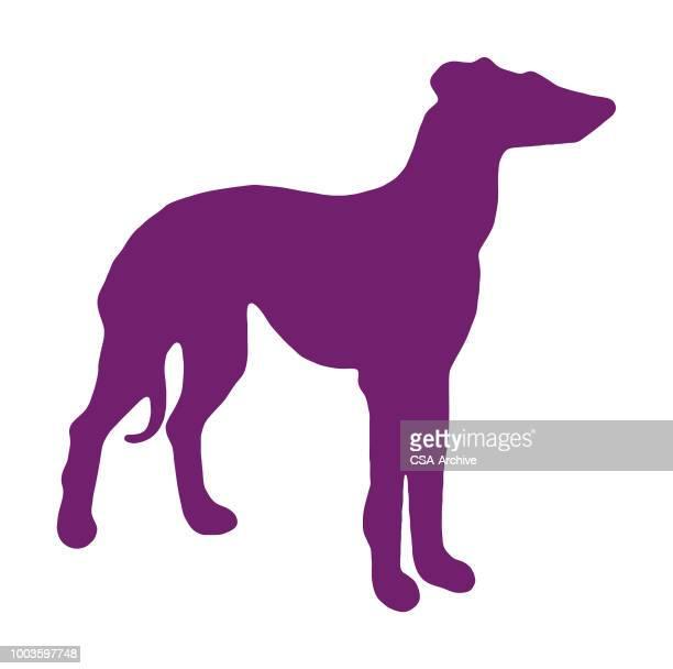 ilustraciones, imágenes clip art, dibujos animados e iconos de stock de silueta de deerhound/greyhound - galgo