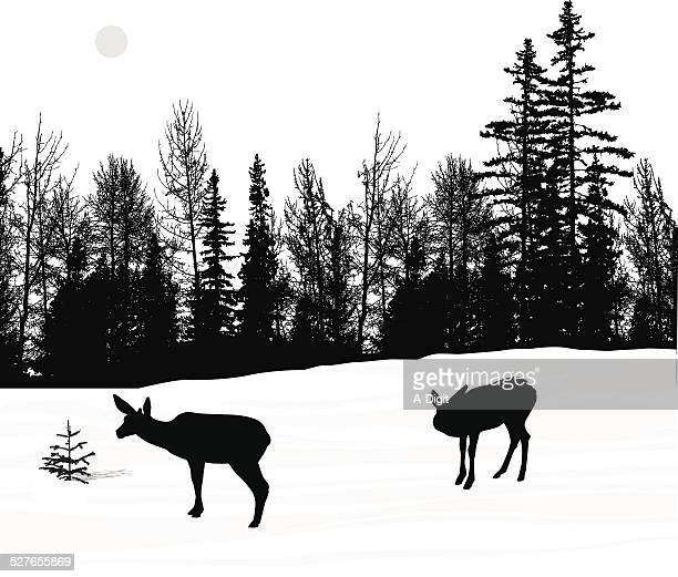 illustrations, cliparts, dessins animés et icônes de deerwinter - biche