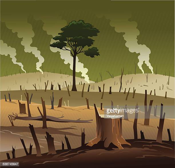 deforestation and the lonely tree - deforestation stock illustrations