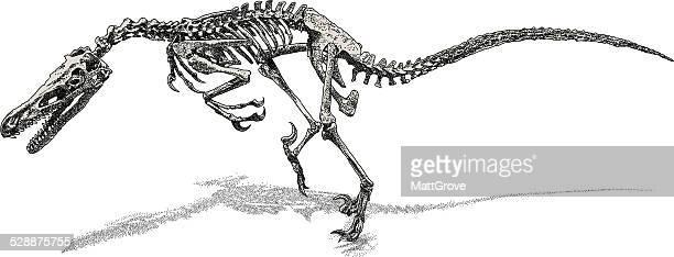 deinonychus - animal skeleton stock illustrations, clip art, cartoons, & icons